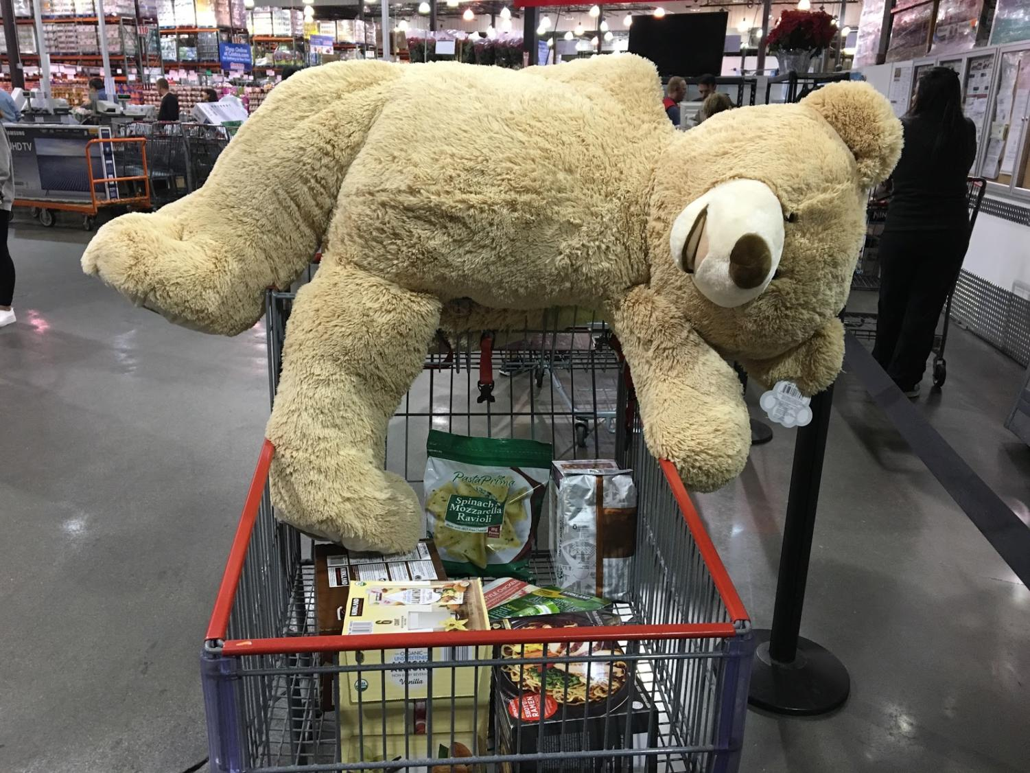 Just another teddy bear waiting to go to a good home and collect dust for years.